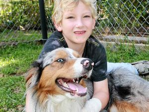 Neighbour's dog allegedly bites autistic boy on wrist
