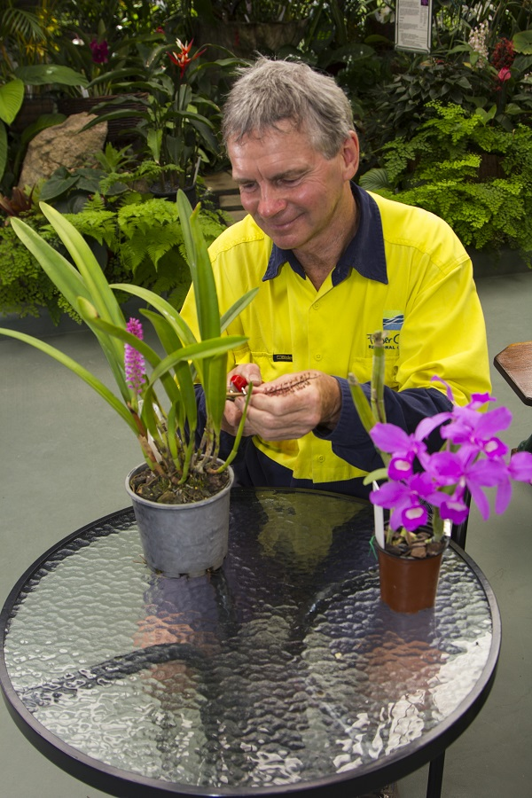 Fraser Coast Regional Council horticulturalist Darryl Coombes will be sharing his knowledge at an orchid potting workshop on October 3.