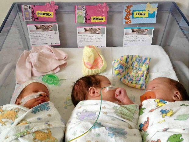 Phoenix, Indica and Tywin were born at Royal Brisbane Women's Hospital last year.