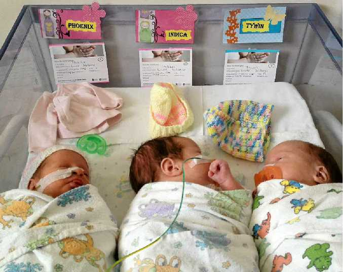 Phoenix, Indica and Tywin were born at Royal Brisbane Women's Hospital last year.