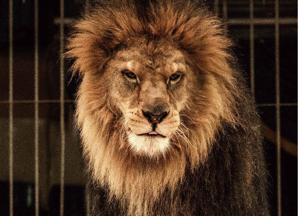 Roar deal for animal lovers?