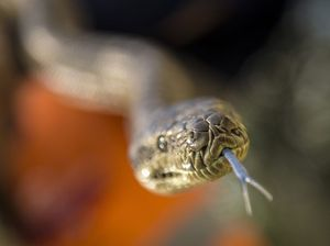 Top tips to keep your home snake free and pets safe
