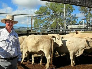 Southern Queensland livestock sales