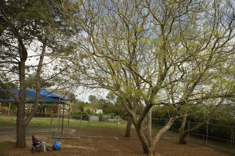 Gretchen Graf sets up camp beneath a jacaranda tree at Gabbinbar State School.