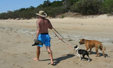 The bull mastiff and boston terrier involved in the dog attack at Urangan beach.
