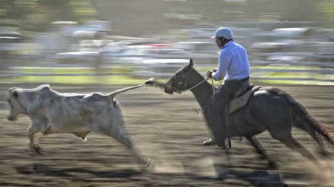 SPEEDINESS: Horse and rider combine in classic action from the Copmanhurst Campdraft. PHOTO: ADAM HOURIGAN