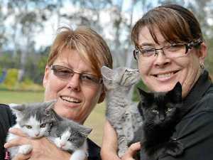 Gympie council cans registration of feline friends