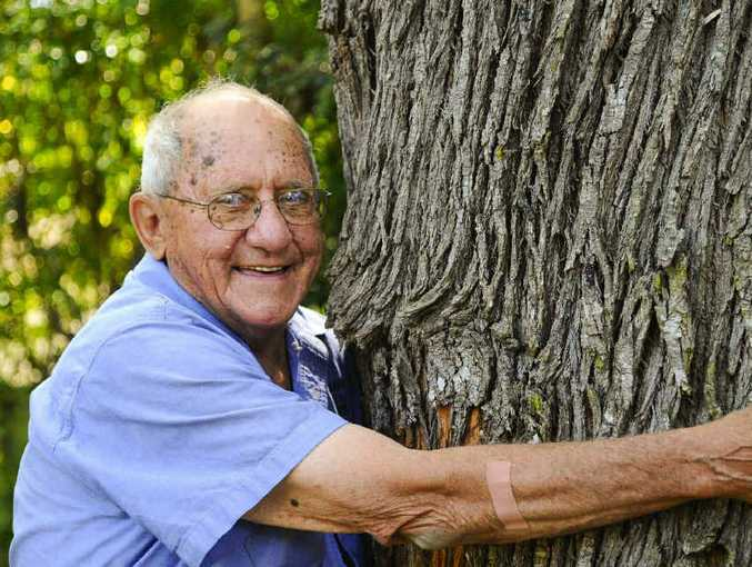 OLD HAND: Spiro Notaras measures the silky oak tree in Karl Cooksley's backyard in Grafton, which will be milled to provide wood to the local Men's Shed. Photo: JoJo Newby