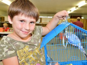 Club chirping about success of annual bird sale