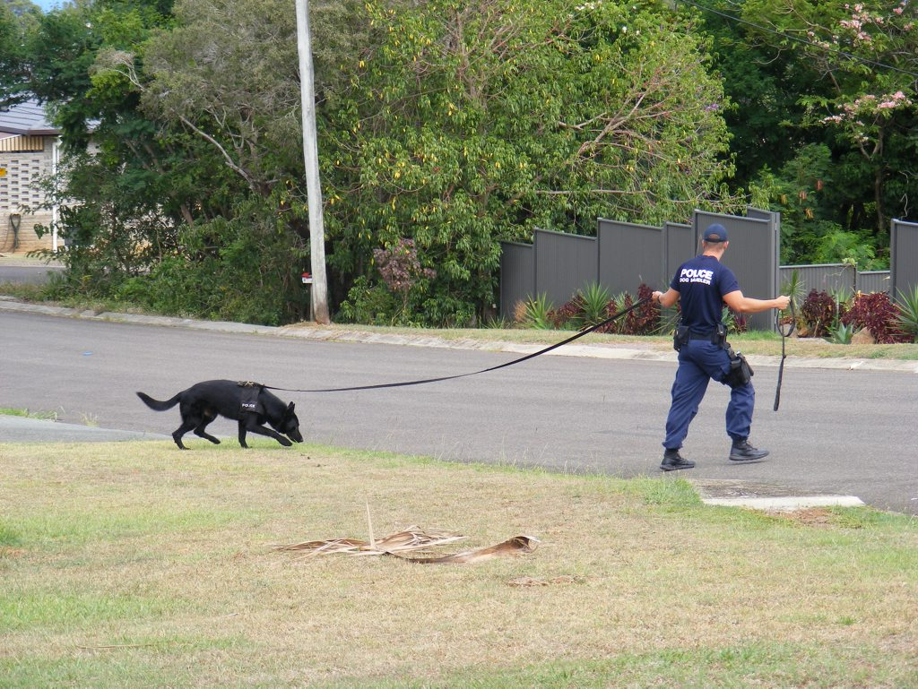 A police canine unit on the job. File photo.