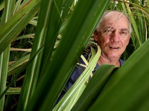 Sugarcane fields not protected under new CSG rules