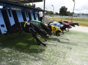Greyhound officials cautious after ban overturned