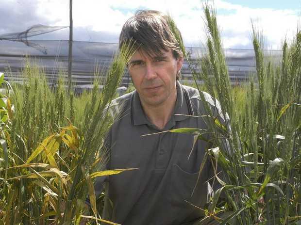 Australian Cereal Rust Control Program Director Professor Robert Park.