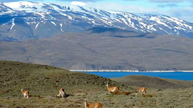 Sarmiento Lake features a collection of calcium carbonate formations. Guanacos enjoy the view.