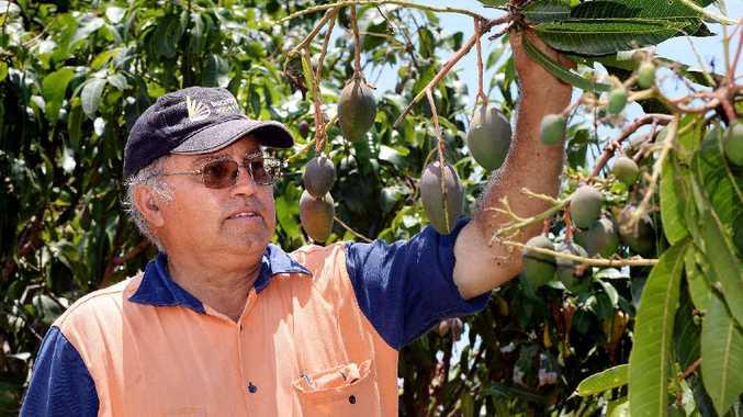 Mango farmer Brian Camilleri.