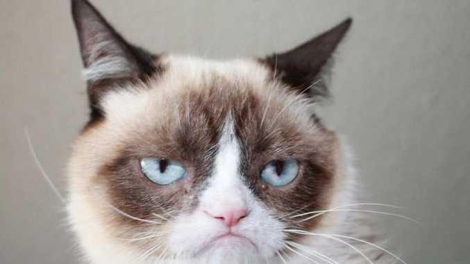 Grumpy Cat isn't impressed.
