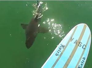 Paddler meets Great Whites (Warning: offensive language)