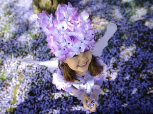 Jacaranda Festival: What's on this weekend