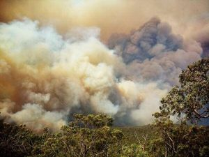 Blue Mountains to flee the firestorm