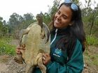 Dr Mariana Campbell from the University of Queensland is one of the many people to research the Mary River turtle.