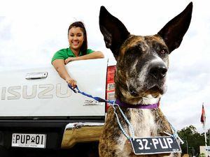 Pimp your ride with a plate for your pooch