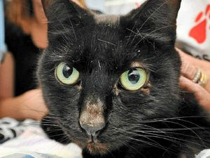 Good luck as black cat returns home after five years missing