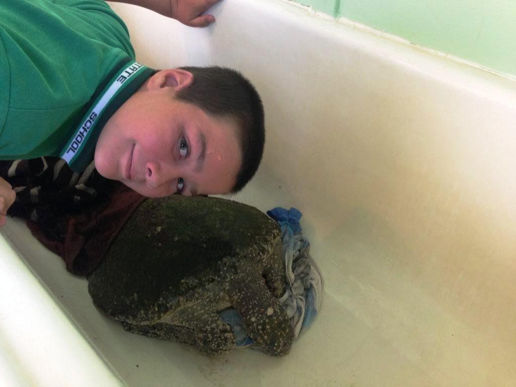 Marine Action Conservation Society eco-ranger Josh Kook with the sick green turtle in Tim Jack Adams bath.
