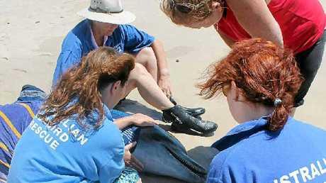 STRANDED DOLPHIN: Volunteers on Sharpes Beach yesterday, clockwise from front, Australian Seabird Rescue general manager Kath Southwell, ASR volunteer Julie Thomas, Debbie Lloyd of Ballina and ASR volunteer Darni Suslov.