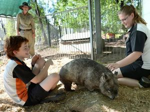 Wombat slow to reveal info for zoo keeper studying masters