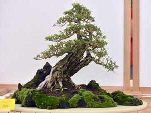 Bonsai talk and twilight tour at botanic gardens