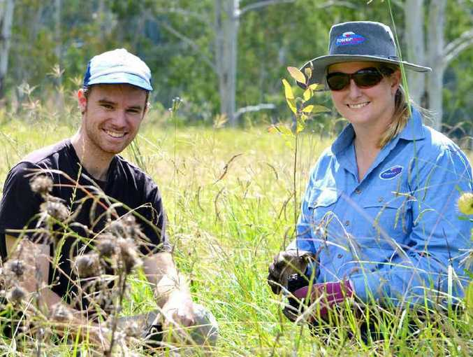 KOALA RESEARCH: Andrew Lamb and Powerlink's Melissa Lunney plant koala food trees.
