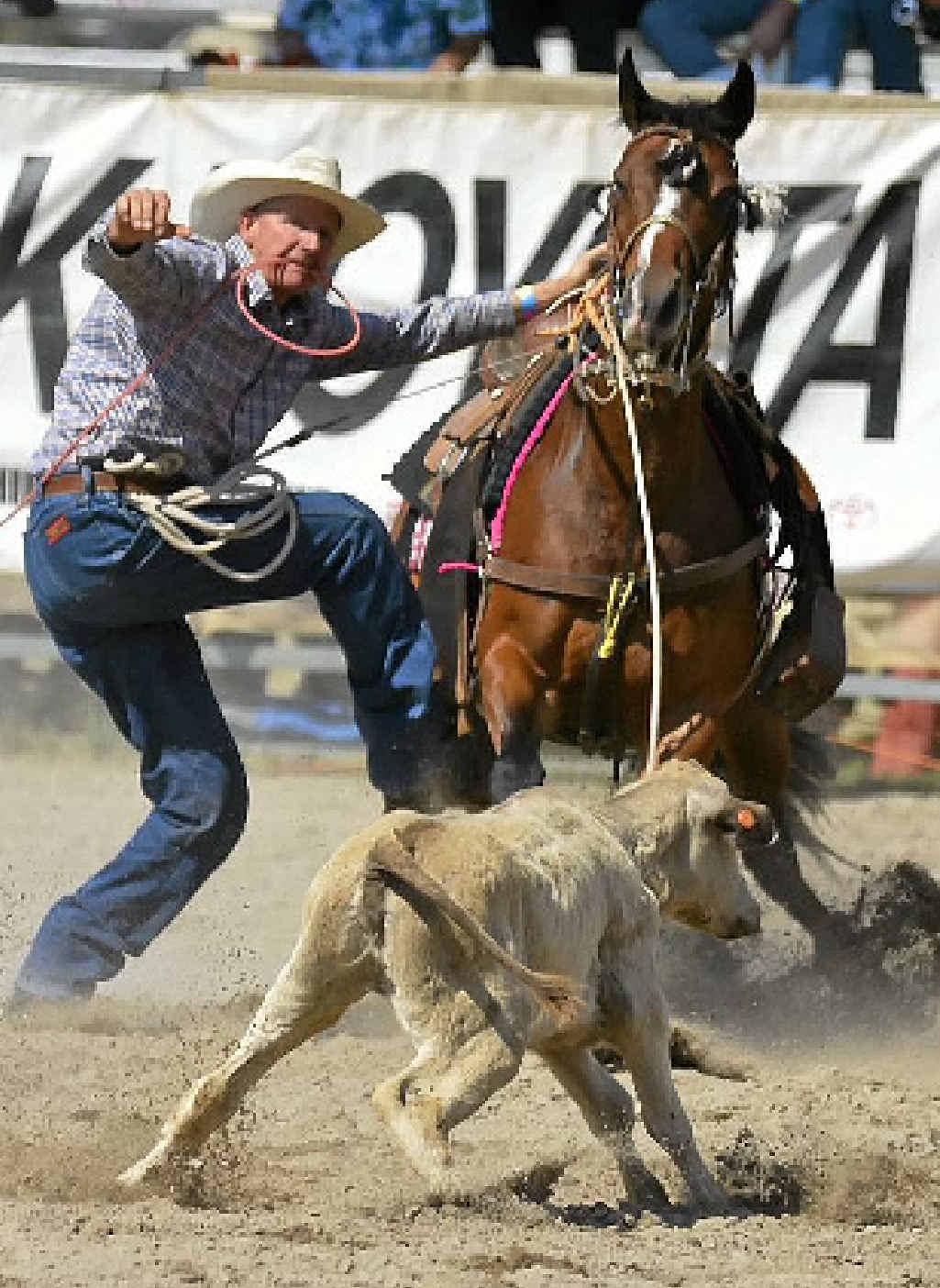 Allen Warwick Porn allan flood credits horse in roping win | chinchilla news