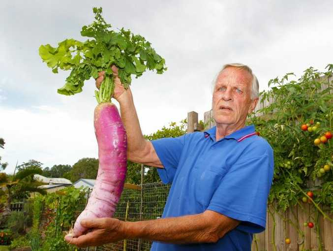 Nambour's Kerry Austin has grown a very large radish from seed in his backyard vegetable garden. He does know what variety it is. Photo: Brett Wortman / Sunshine Coast Daily