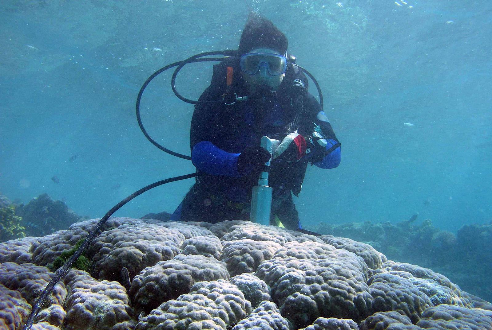 ANU's Dr Jennie Mallela takes a coral core skeleton sample.