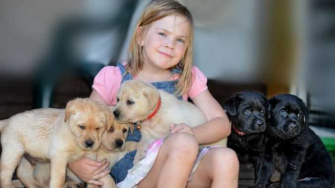 Jamie McCarthy, 5, is missing the mother of her puppies in the Glasshouse Mountains.