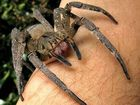 Woman charged after trying to set fire to spiders