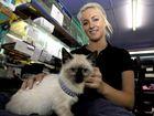Gladstone's favourite shops merge at new mega pet store