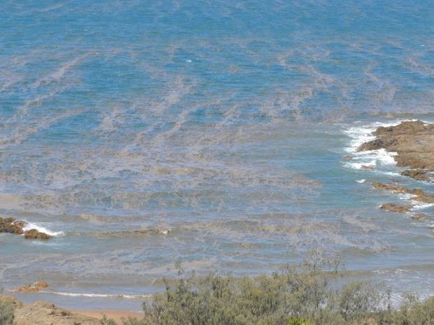 Algal blooms are common in the coastal waters of the Gladstone region at this time of year.