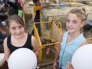 Pig races raise $4000 for Mater Dei Primary School