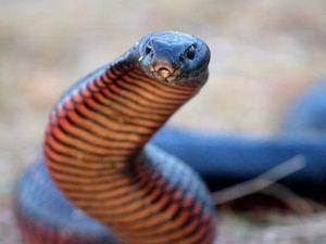 Spike in snake bites prompts warning
