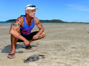 Dead tired muttonbirds found on Capricorn Coast beaches