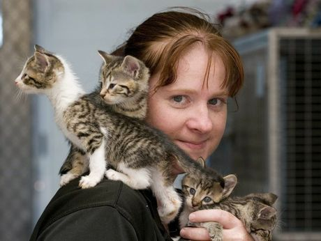 RSPCA shelter manager Cassie Walker with kittens in need of help.