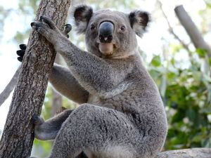 Rockhampton Zoo to showcase its threatened species programs