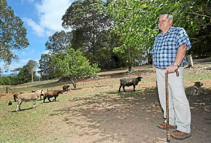SICKENING LOSS: Les Hadlow of Ninderry lost nine sheep when wild dogs got among them this week. Sunshine Coast Council considers wild dogs a serious issue.