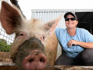 Pet pigs prove true survivors after treading water in flood