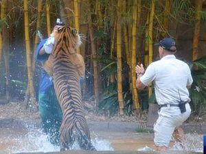 Mauled Australia Zoo handler 'excited' tiger for show