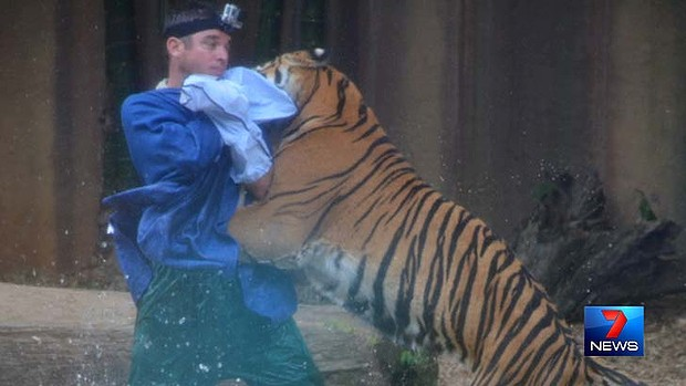 An Australia Zoo tiger handler was attacked during a show in 2013. Image: Seven News