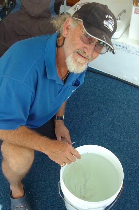 Captain Ken Smith scooped a deadly box jellyfish out of Gladstone harbour at the marina on Wednesday, November 27.