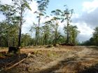 Gumbaynggir people take a stand against logging