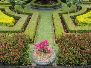 Rodway Open Garden
